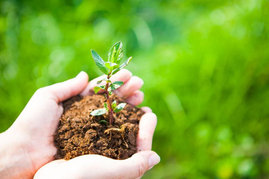 mains tenant une motte de terre avec une jeune pousse
